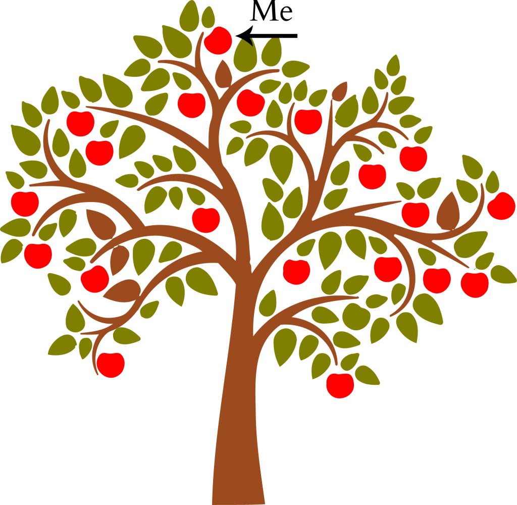 apple tree2
