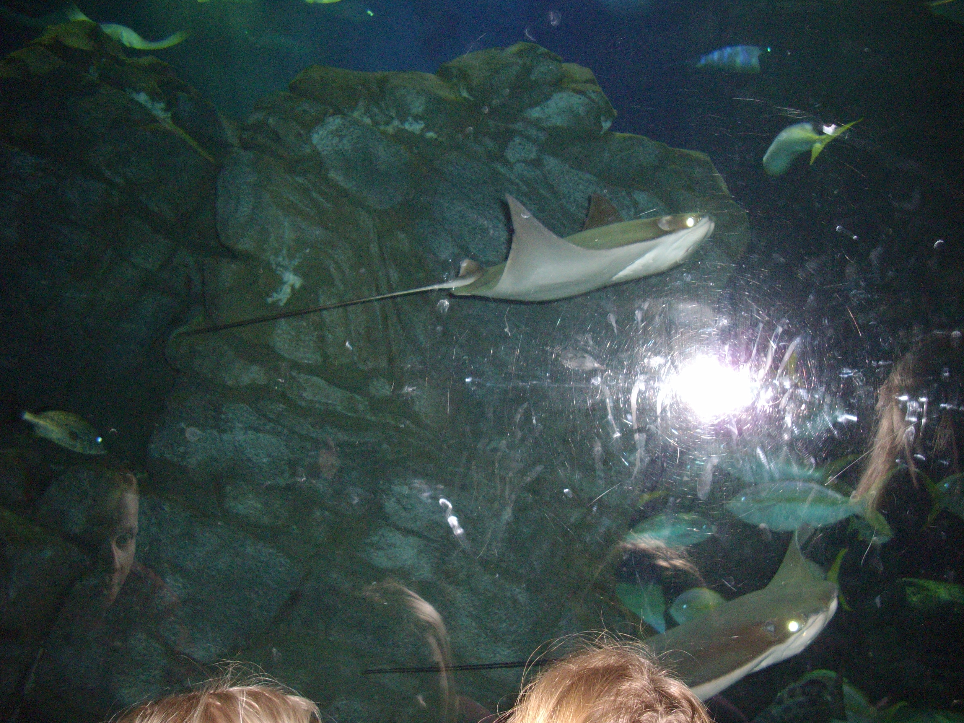 Ripley's Aquarium, Toronto, fish, aquarium, animal rights