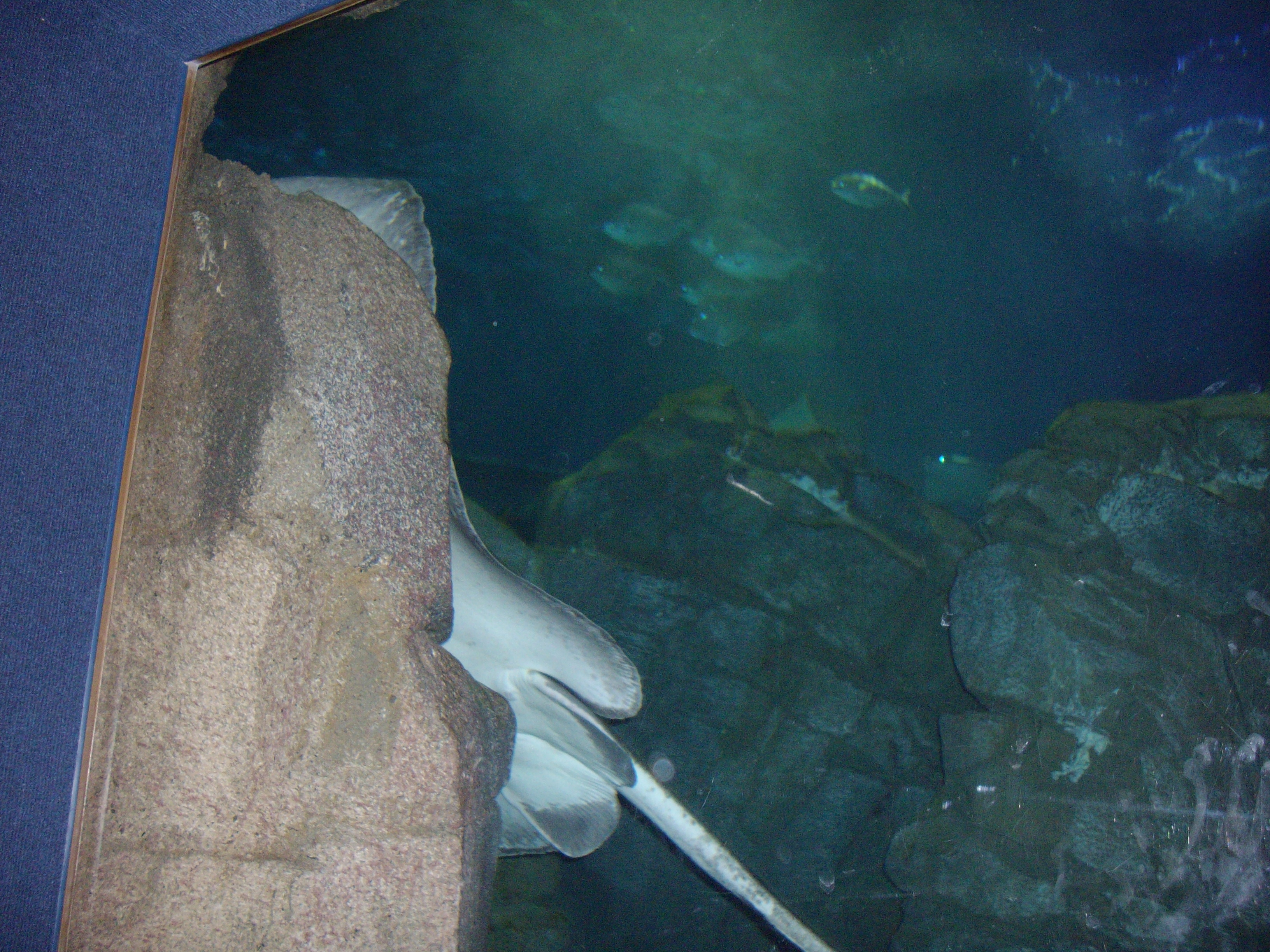Ripley's Aquarium, Toronto, fish, animal rights